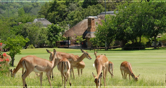 Kruger Park Lodge, Hazyview