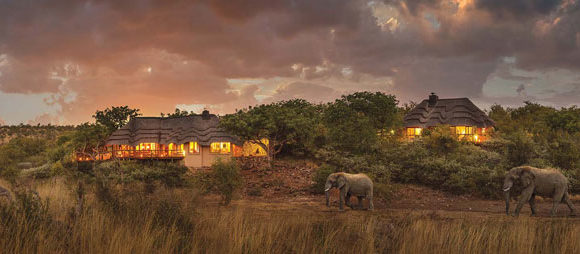 Tuningi – Madikwe Private Game Reserve